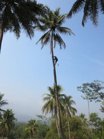 palm IMG_7467